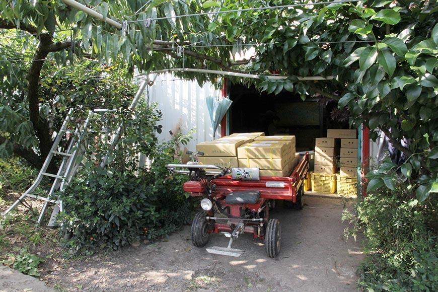 搬運車上疊起裝箱的梨子,之後會送到附近的宅急便寄貨。