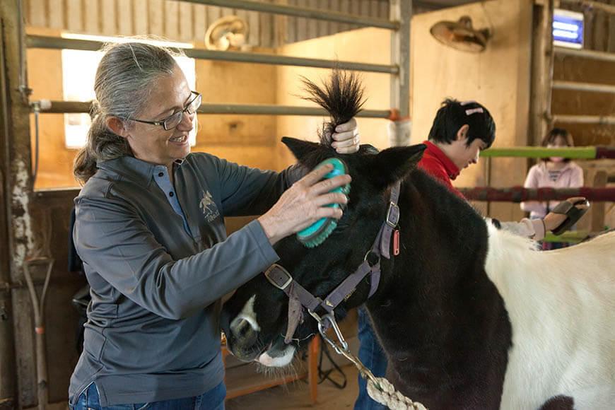 照顧馬(如餵食、刷毛等)可以讓個案學習責任感。