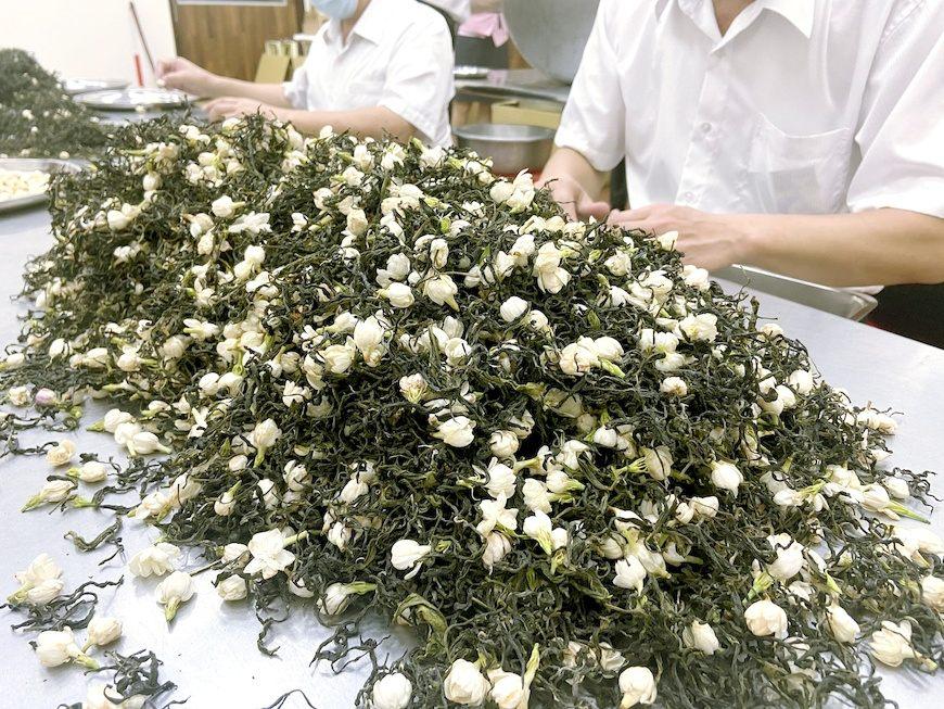 傳統窨製工法製茶,讓茶葉吸附自然花香,過程繁複。(花壇鄉農會提供)。花壇鄉農會。茉莉金萱。茉莉包種。