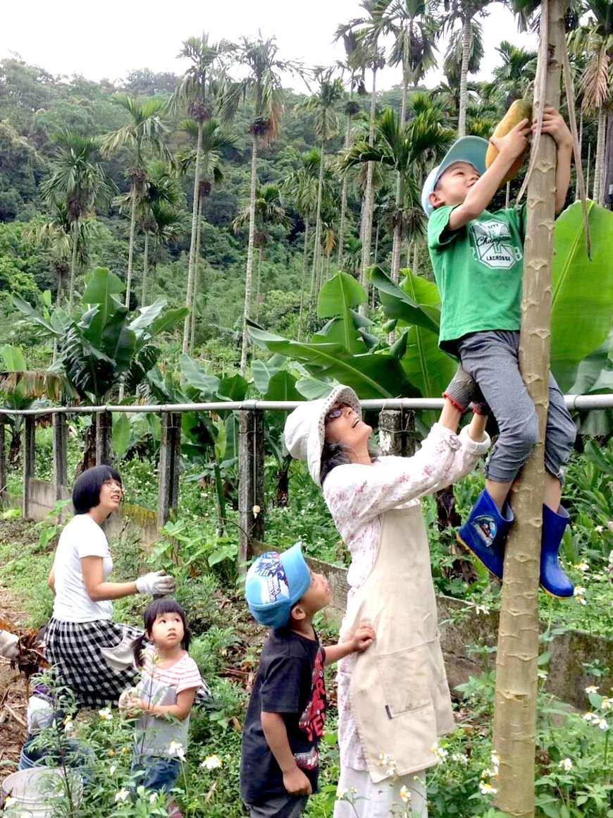 華德福農耕共學,6歲的孩子爬高高採下木瓜與大家分享。(照片提供/陳櫻容)。共學團體。綠繪本。育兒。共學。