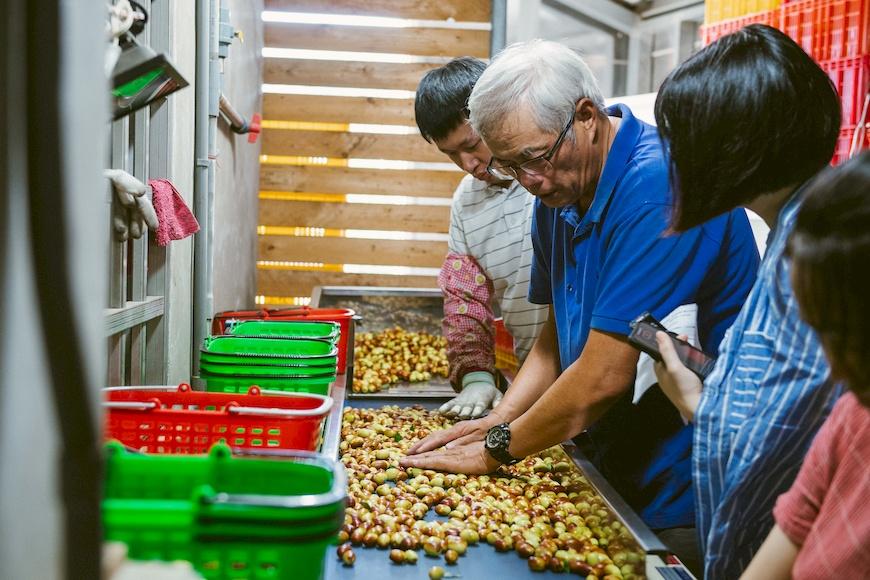 黃炳華改進原番茄分級機,加裝輸送帶用於紅棗分級。上校紅棗有機農場。黃炳華。紅棗。紅棗乾。Y型栽種法。永續農業。有機。