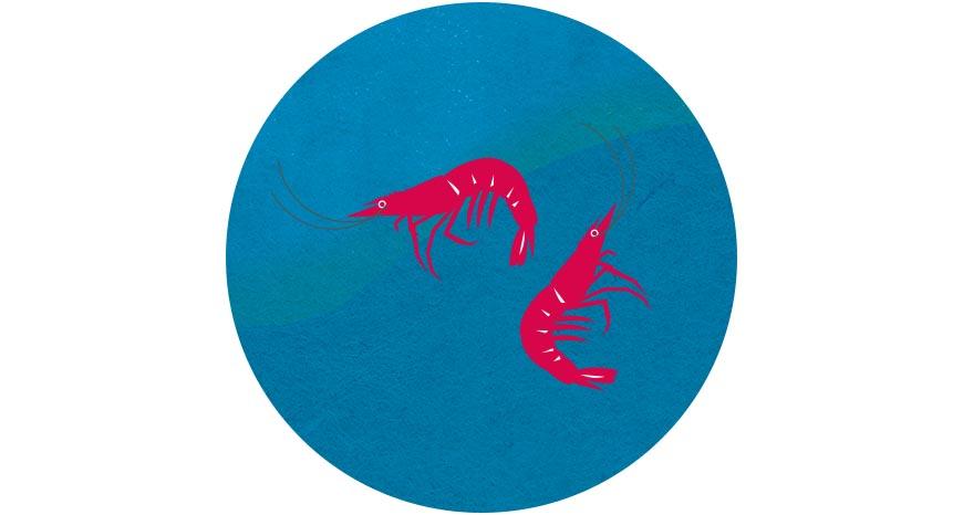 蝦子  好食材來自好的生產環境,過年就來一盤自然鮮甜又永續環境的「生態蝦」吧!生態養殖蝦多半與不同魚種混養,有助維持水中生態平衡與水質,並可降低單一物種養殖的用藥,同時加強雨水回收再利用,減少使用地下水,避免地層下陷。