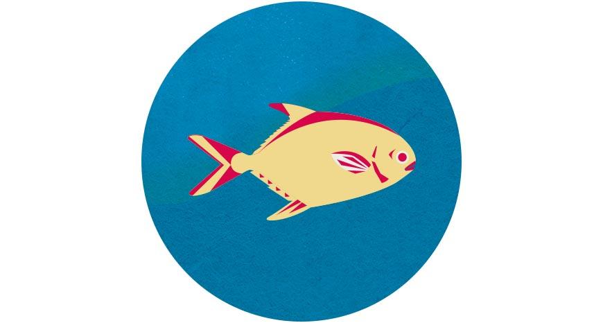 金鯧  年節餐桌總少不了一條魚,尤其以白鯧更受青睞,因取其「鯧」字討吉祥。然而,白鯧因過度捕撈已需進口供應,相較於昂貴的白鯧,以海洋箱網養殖方式的「金鯧」(紅衫)也是經濟又美味的魚種,同時永續海洋資源。