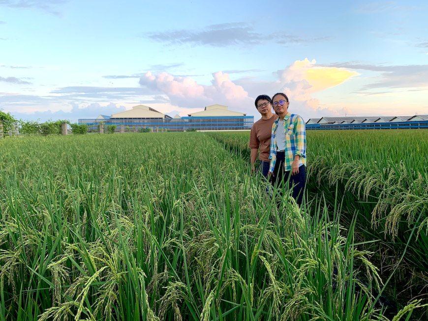 青農,自然農法,爆芽蜘蛛
