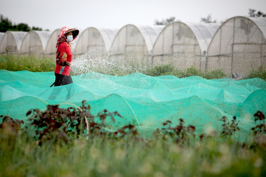 筠水觀農園,減硝酸鹽