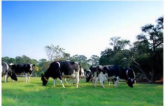 四方---來自健康牛群的純淨鮮奶