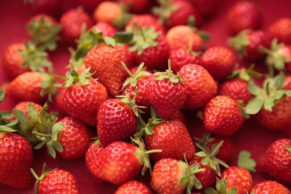 洪淑珍的有機路 (10)_草莓