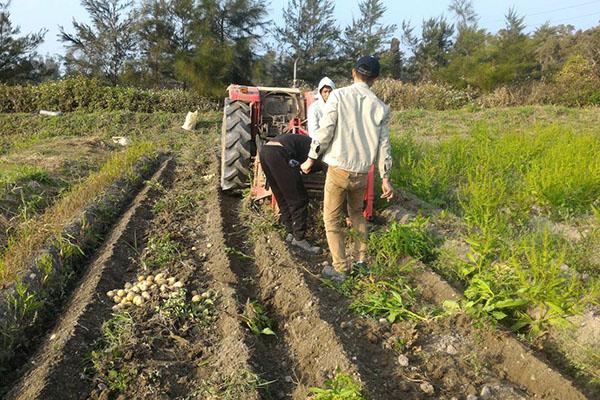 看天田農場2web