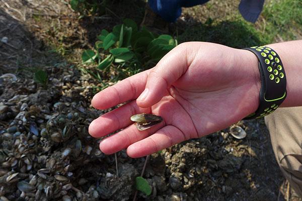 黑金文蛤為什麼虛弱了 (2)